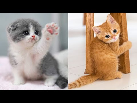 Baby Cats - Cute and Funny Cat Videos Compilation #19 | Aww Animals
