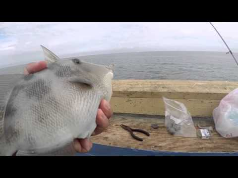 Fishing For Triggerfish And Parrotfish Using Squid (Fort Lauderdale, FL)