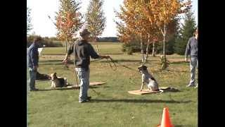 Obedience Training @ Rr Professional Dog Training Mn