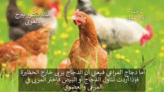 قبل مشاهدة هذا الفيديوإياك أن تأكل الدجاج