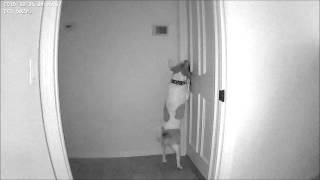 Escape artist dog  you won't believe this