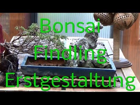 Bonsai Erstgestaltung Findling