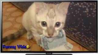 Best FUNNY Cats Fails Compilation Part 2 | FUNNY Cat Videos 2015 - FUNNY Pets, FUNNY Animals