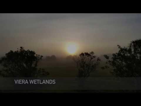 Viera Wetlands May 2016
