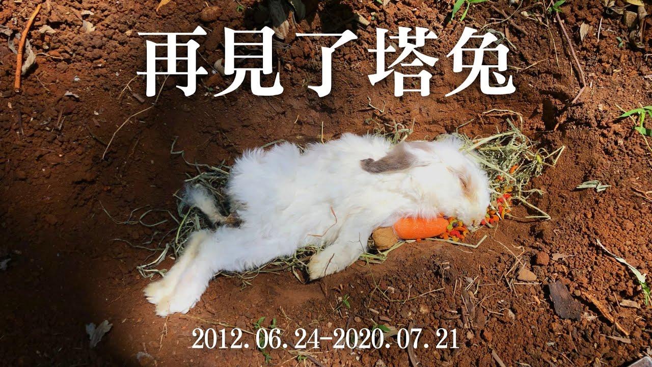 再見了塔兔