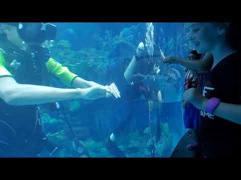 Epcot aquarium