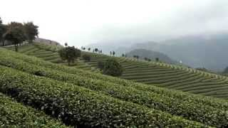 A heavenly organic tea plantation in China - Tg Green Teas