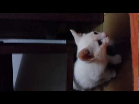 Cute kittens at play - part four
