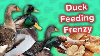 Duck Feeding Frenzy & Smiling Huskies! // Funny Animal Compilation