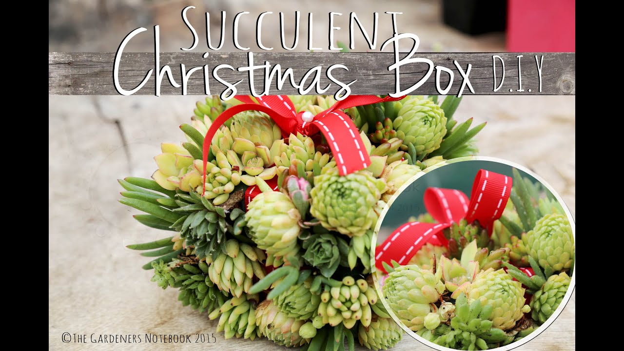 Christmas Succulent Gift.How To Make A Succulent Christmas Gift Floral Art