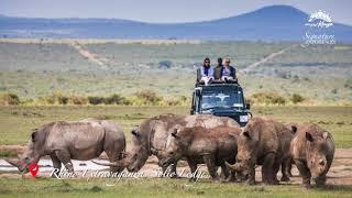 Rhino Extravaganza