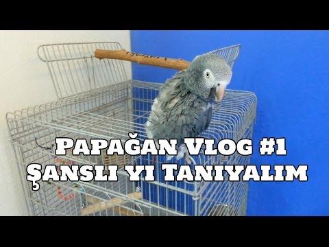 Hobihanem - Papağan Vlog #1 (Şanslı Yı Tanıyalım) [05.03.2017]