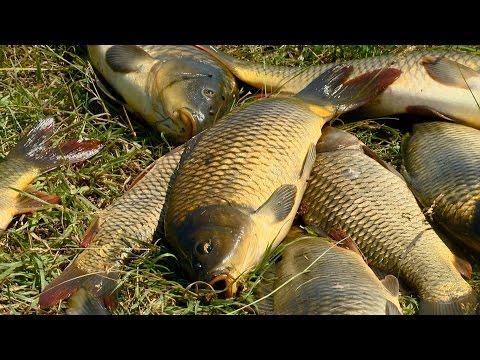 """Рыбак Рыбаку 503 """"Карп на мели""""."""