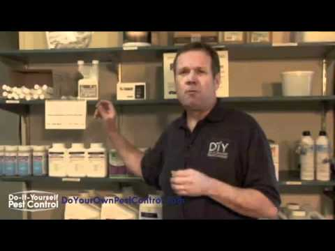 Get Rid Of Ants| Ant Control Products