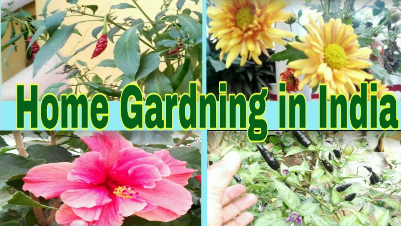 Garden At Home In India Flowers Vegetable Plants Indian Life In Saudi Arabia Youtube