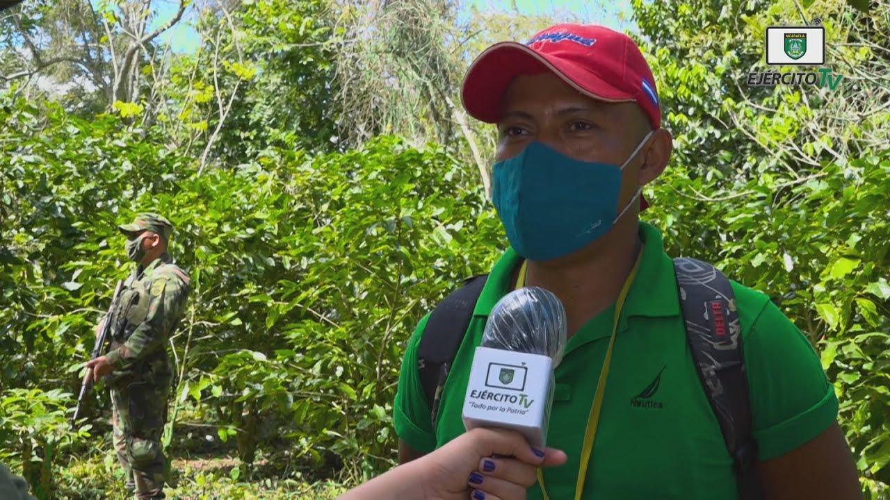 Opiniones sobre la protección y seguridad a la cosecha cafetalera en Carazo