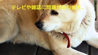 詳細はこちら⇒http://t-takehisa.net/pet2/ 犬 病気 ペット 犬 犬 しつ...