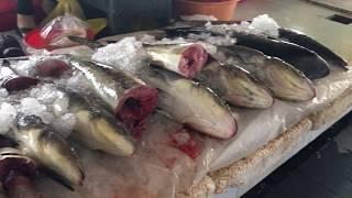 Mua vi cá mập ở chợ Hà Tiên