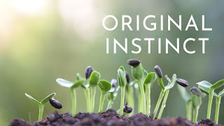 Original Instinct | Meditation