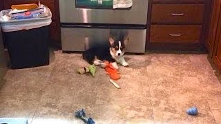 CORGI IN THE KITCHEN - Life After College: Ep. 323 thumbnail