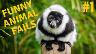 Try Not To Laugh Watching Funny Animal Fails Compilation #1 ✔