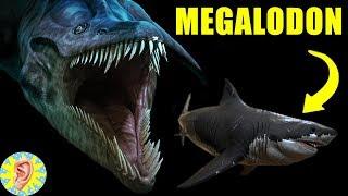 Megalodon 'dan Daha BÜYÜĞÜ Mariana Çukurunda Mı Yaşıyor? En Derinlerdeki 5 Canlı