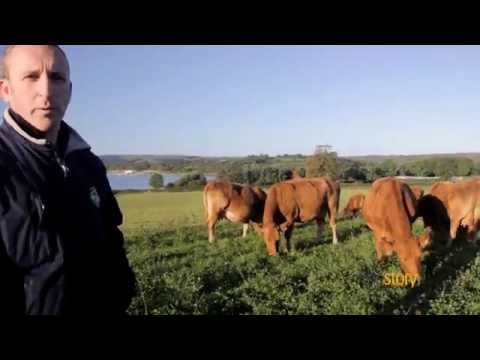 How We Farm Our Beef : Story Organic