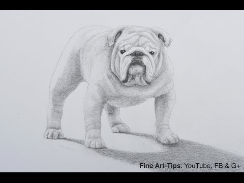 How to Draw a Bulldog With Pencil - A Dog Drawing