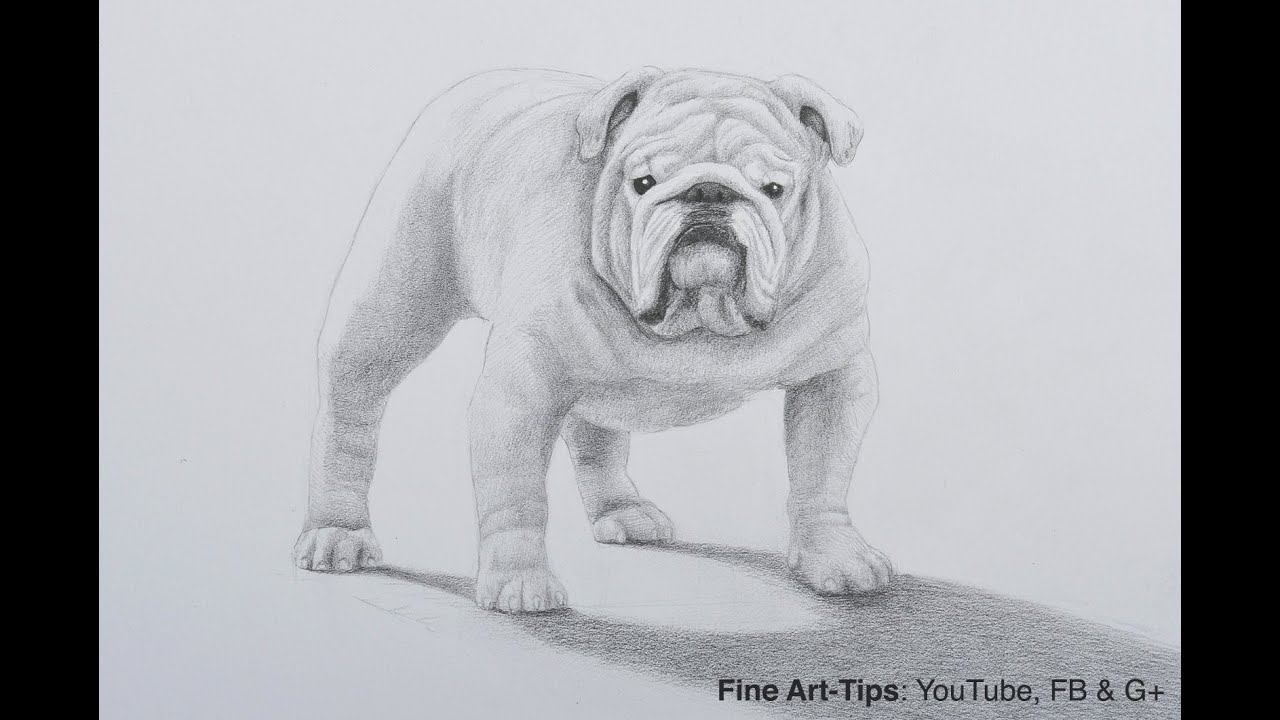 How to draw a bulldog with pencil a dog drawing