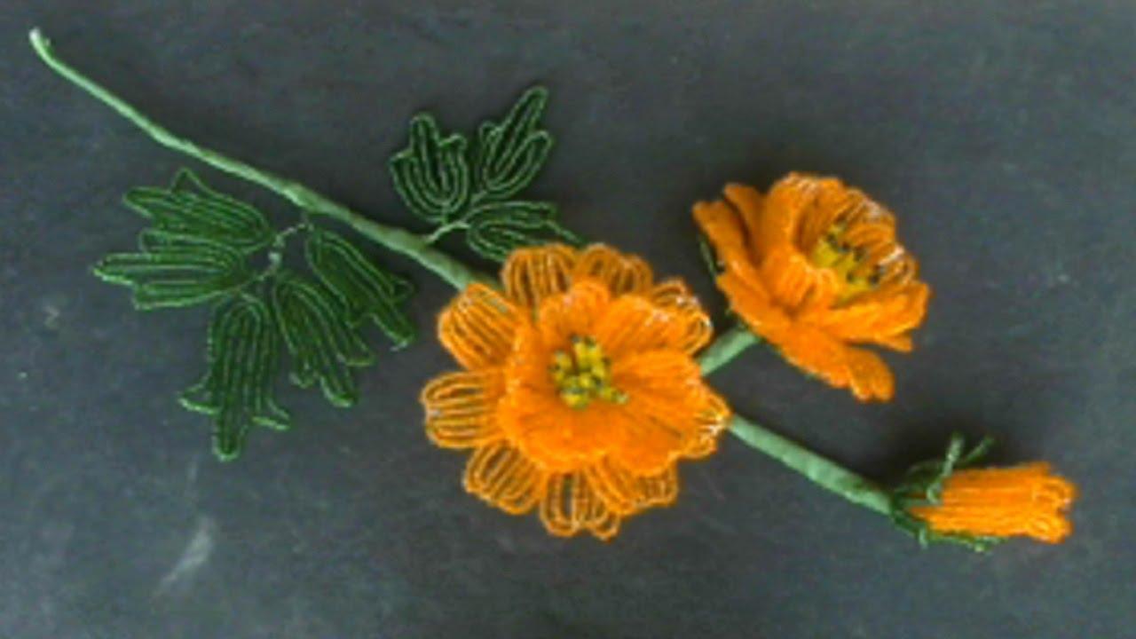 Луговые цветы с желтыми цветами фото и названия