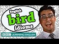 Bird idioms - The Teacher