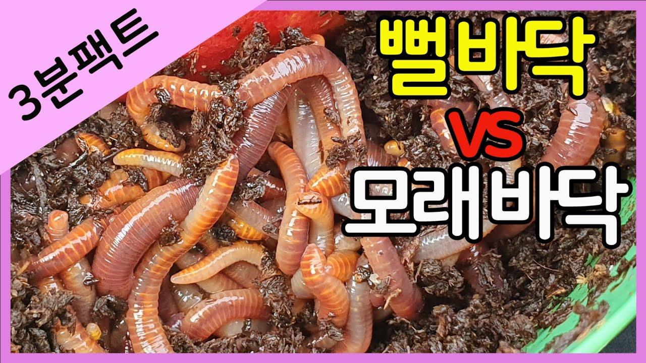 바닥의 차이 - 뻘 vs 모래 (붕어낚시 지렁이 미끼 비교)
