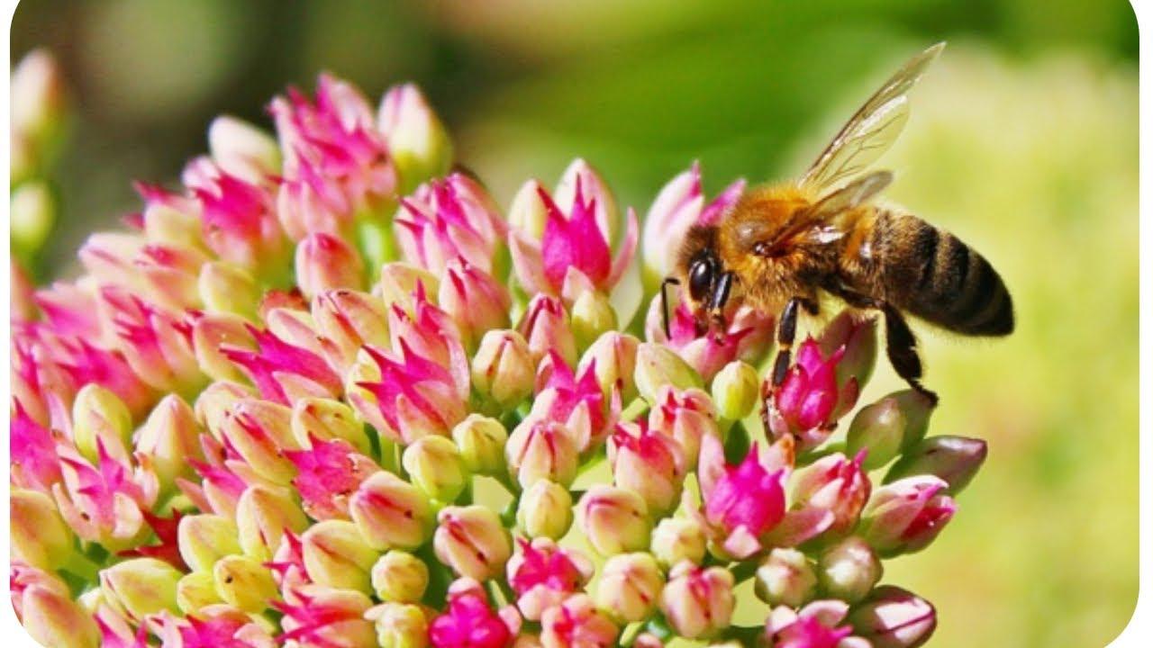 cinq solutions simples et accessibles tous pour sauver les abeilles youtube. Black Bedroom Furniture Sets. Home Design Ideas