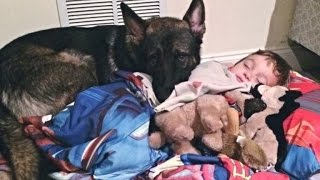 4-Year-Old Boy Gets Tucked In Every Night By His German Shepherd
