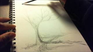 STUART BEVERLY Health Herbs Drawing tree