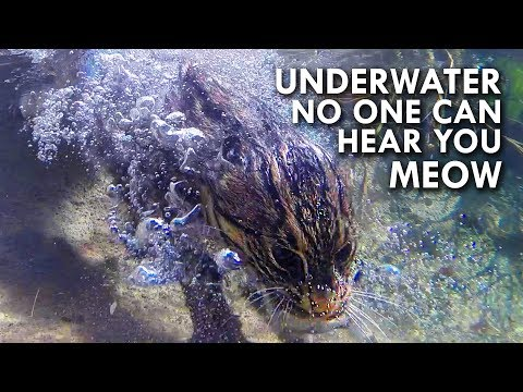 Fishing Cat: The Cat That Hunts Underwater