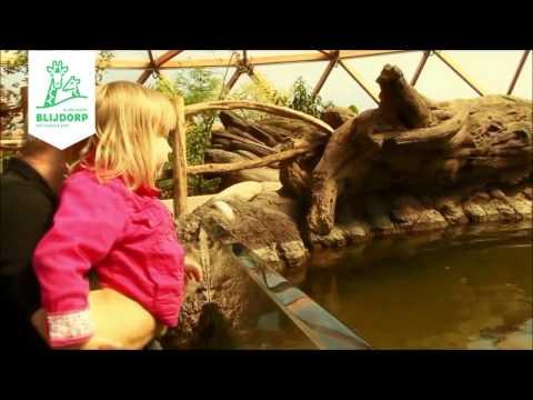 Vlinderparadijs Amazonica in Diergaarde Blijdorp Rotterdam - butterfly paradise Amazonica
