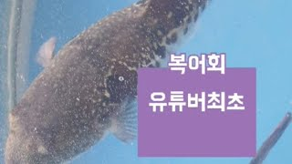 #복어회 #성게알(우니) #자연산 전복  MUKBANG…