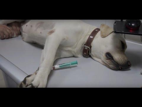 Как правильно ветеринар