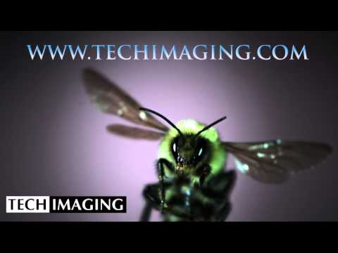 High Speed Camera Video - Bee wings in motion