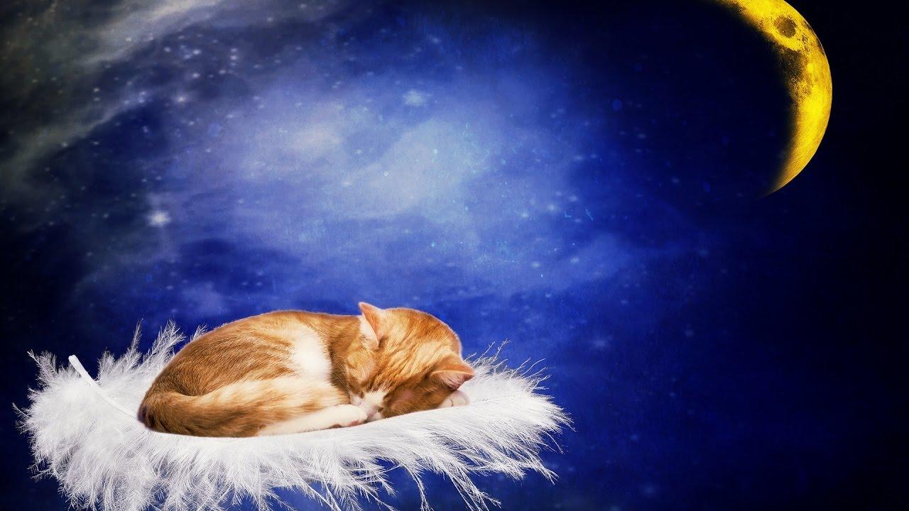 Открытка сладких снов мой дорогой, картинки