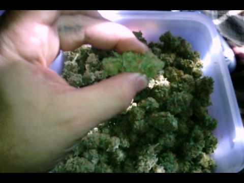 400 Watt Hps Week 5 Cannabis Grow Doovi