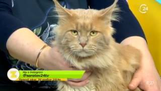 Гость: Ольга Гайдук, заводчик-фелинолог кошек породы мейн-кун