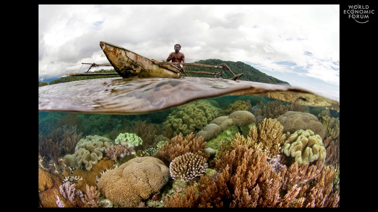 Worlds Underwater | Douglas McCauley - YouTube