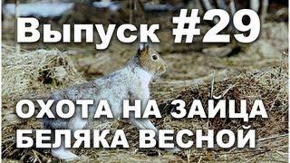 Выпуск 29: Охота весной на зайца беляка онлайн видео 2013 часть 2