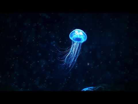 MATRANG - Медуза (Meduza)  | 1 Hour ♬ |