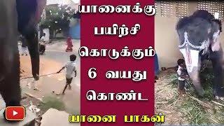 A 6 year old mahout video - Tamil Nadu | Elephant | Chennai | Madurai