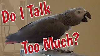 Do I Talk Too Much?