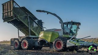 Claas Jaguar 960 Bunker forage Havester / Fieldshuttle mit Claas Orbis beim Mais häckseln 2015
