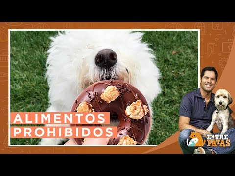 Alimentos prohibidos para tu mascota | Entre Patas